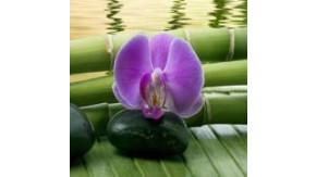Logo Araya Thaimassage